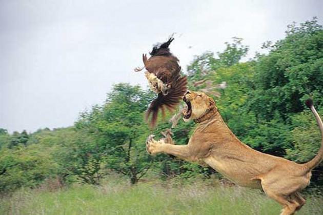 Vahşi doğa fotoğrafları hayrete düşürdü 1