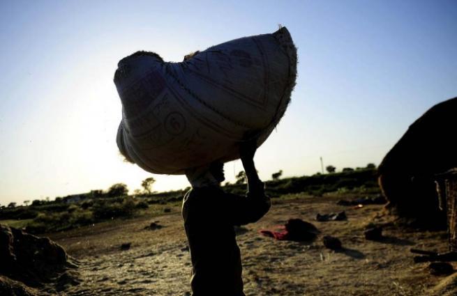 Pakistan'da buğday hasadı 10