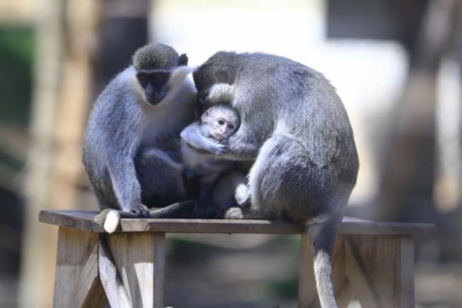 Hayvanat bahçesinin yavruları 10