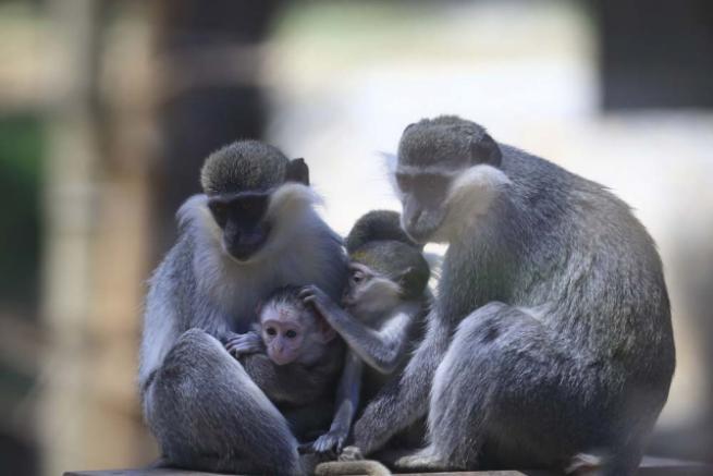 Hayvanat bahçesinin yavruları 5