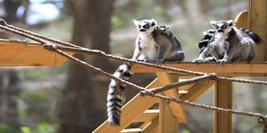 Hayvanat bahçesinin yavruları