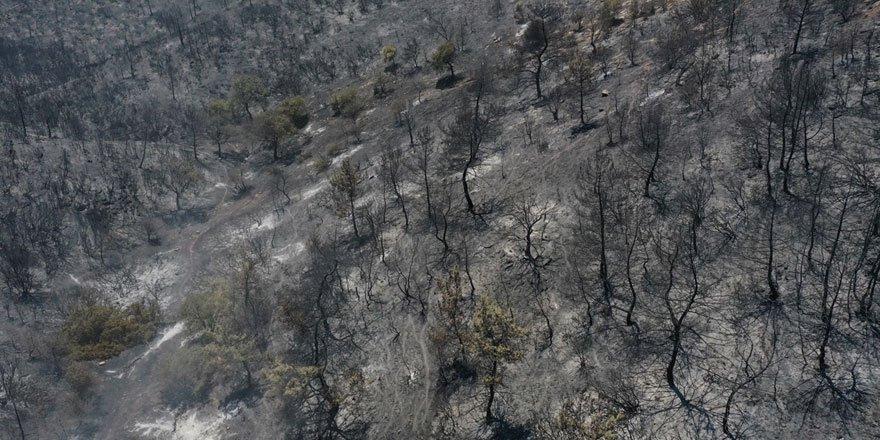 İzmir Menderes yangınından geriye kalan görüntü yürekleri yaktı!