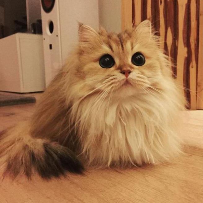 Dünyanın en fotojenik kedisi 1