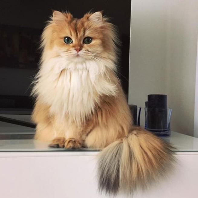 Dünyanın en fotojenik kedisi 3
