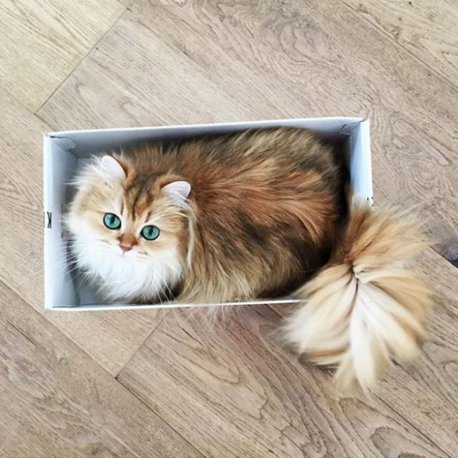 Dünyanın en fotojenik kedisi 7