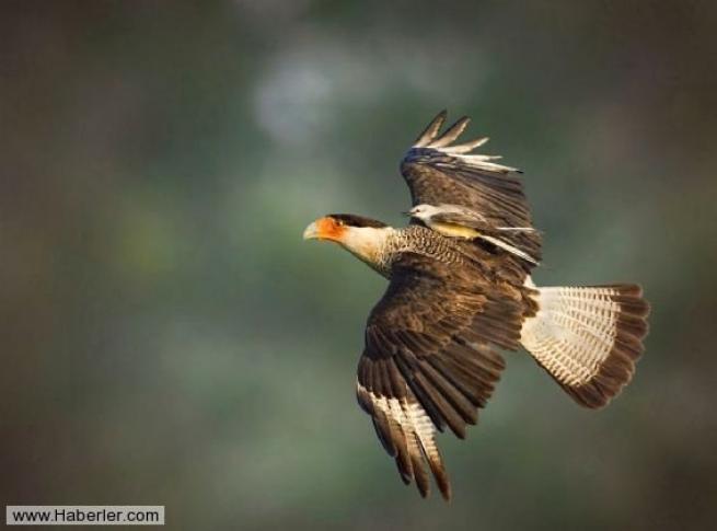 Doğal yaşamdan ödüllü 28 fotoğraf 24