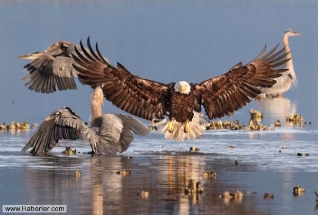 Doğal yaşamdan ödüllü 28 fotoğraf 28