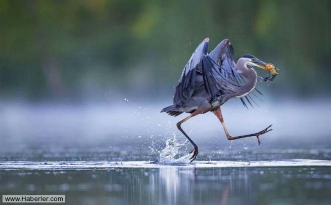 Doğal yaşamdan ödüllü 28 fotoğraf 6