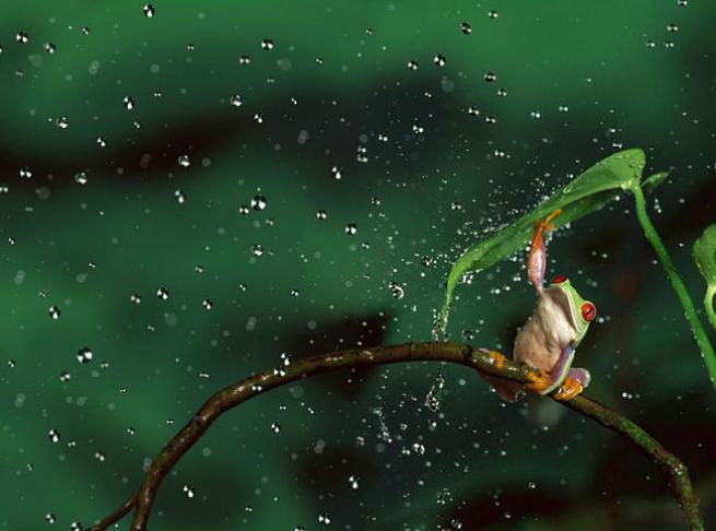 Yağmurdan korunmaya çalışan şirin hayvanlar 1