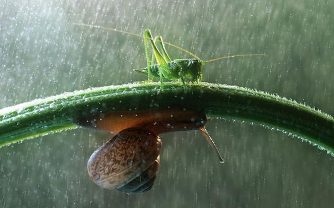 Yağmurdan korunmaya çalışan şirin hayvanlar 10