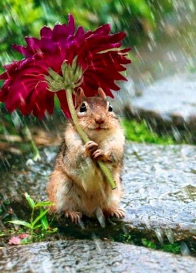Yağmurdan korunmaya çalışan şirin hayvanlar 14