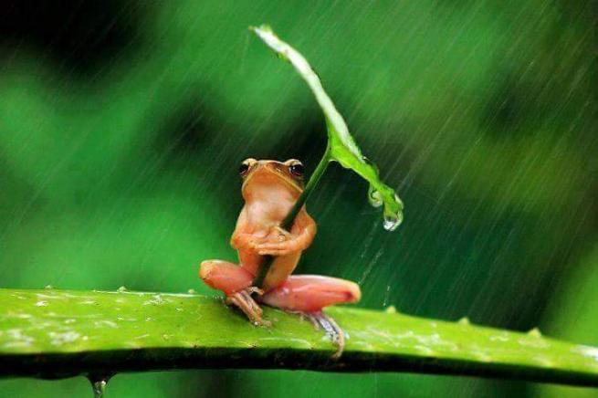 Yağmurdan korunmaya çalışan şirin hayvanlar 15