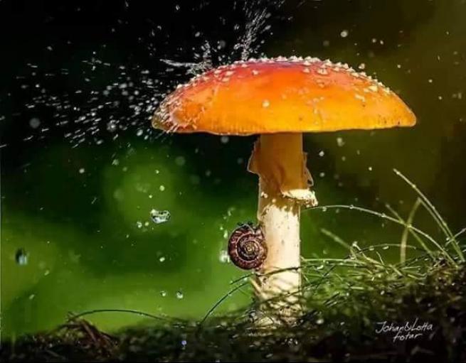 Yağmurdan korunmaya çalışan şirin hayvanlar 18