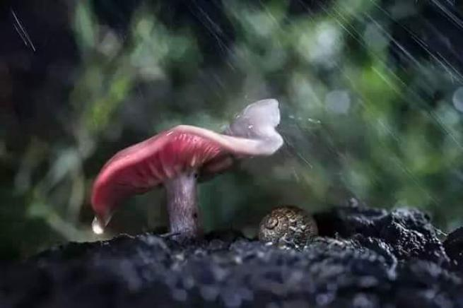 Yağmurdan korunmaya çalışan şirin hayvanlar 20