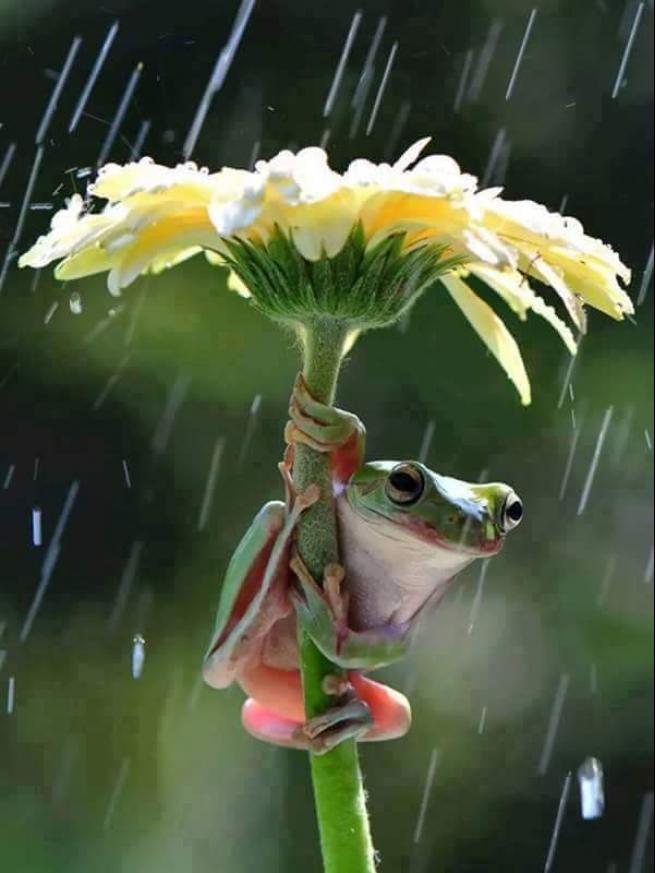 Yağmurdan korunmaya çalışan şirin hayvanlar 21