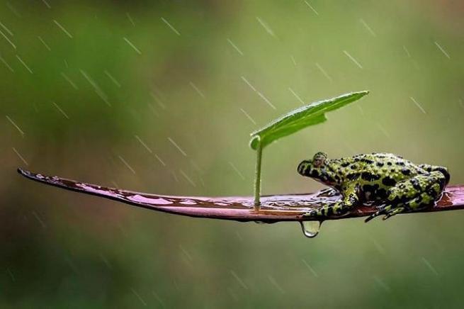 Yağmurdan korunmaya çalışan şirin hayvanlar 3
