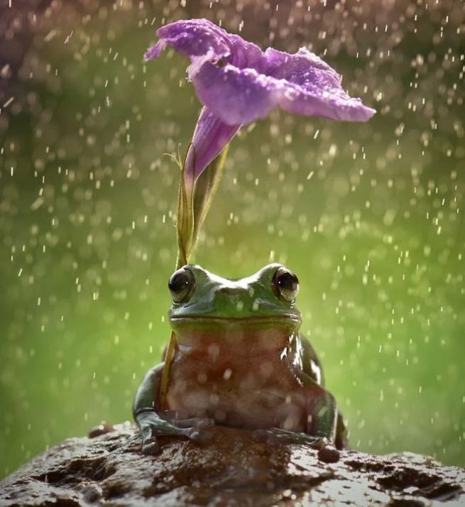 Yağmurdan korunmaya çalışan şirin hayvanlar 7