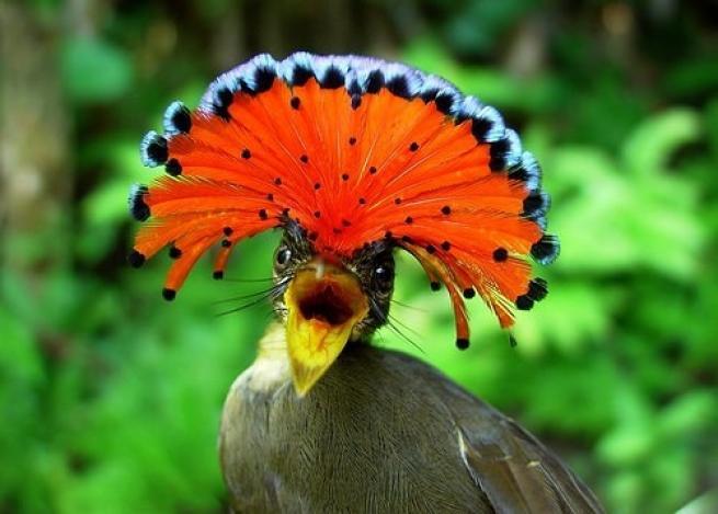 Dünyanın en garip 20 hayvanı 1