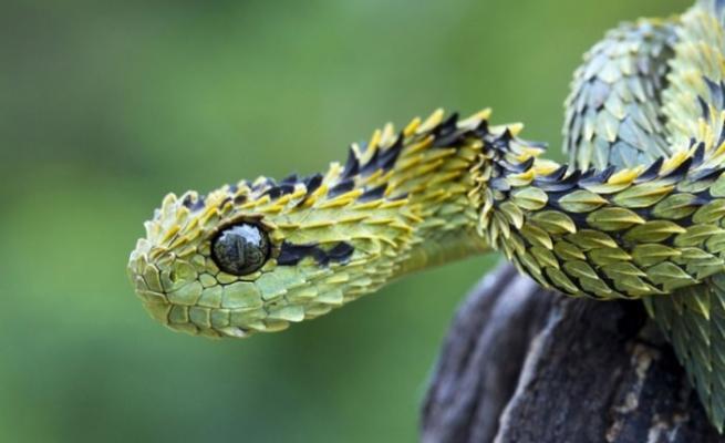Dünyanın en garip 20 hayvanı 11