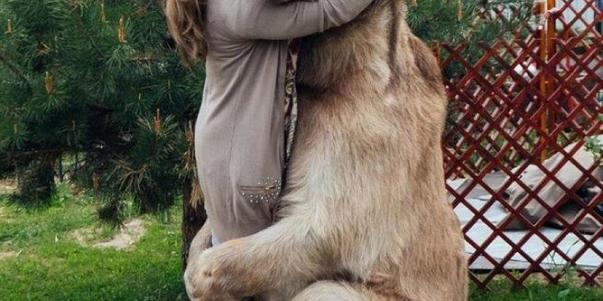 Rus aile evlerinde ayı besliyor