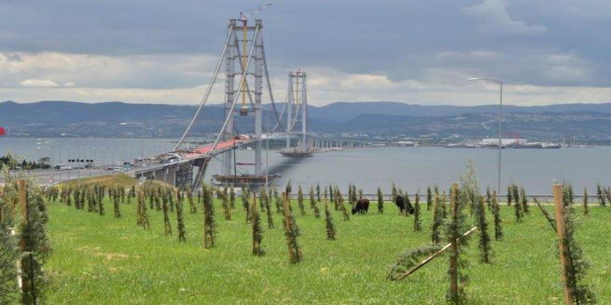 Osmangazi Köprüsü hazır
