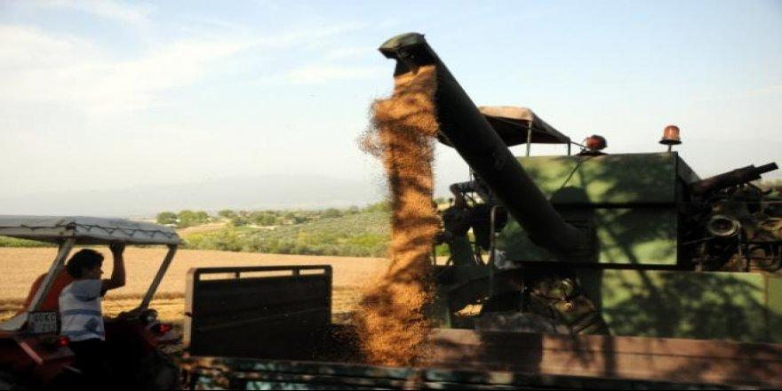 Buğdayın 'yufka ekmeğe' uzanan zahmetli yolculuğu