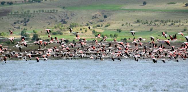 Burdur'da 5 bin flamingo 1