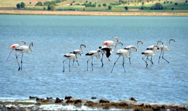Burdur'da 5 bin flamingo 2