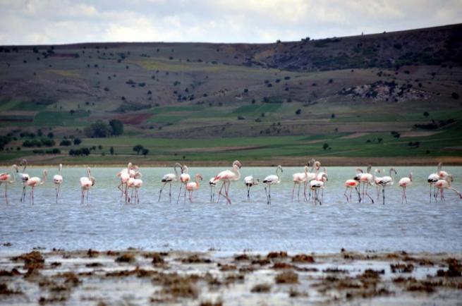 Burdur'da 5 bin flamingo 4
