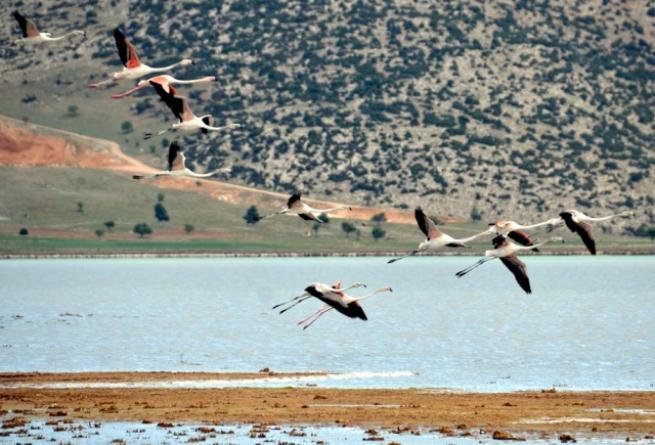 Burdur'da 5 bin flamingo 5