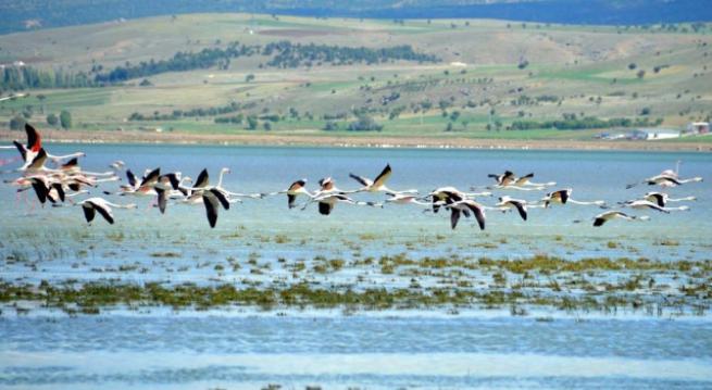 Burdur'da 5 bin flamingo 6