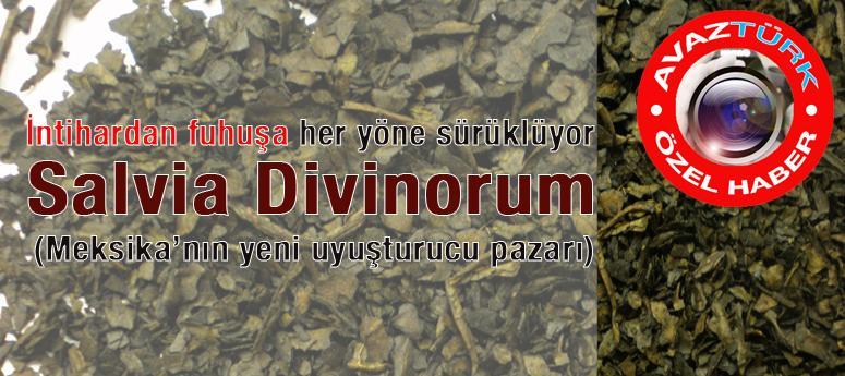 Aktarlarda satılan UYUŞTURUCU; Salvia Divinorum!