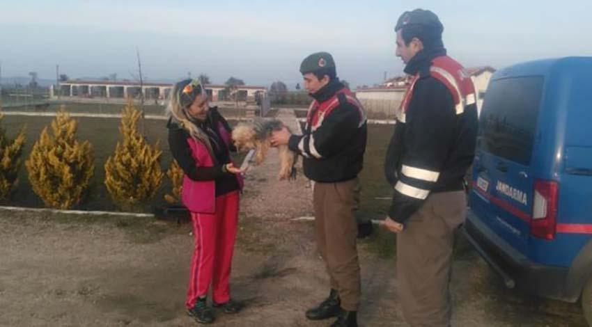 Jandarma çalınan köpekleri buldu