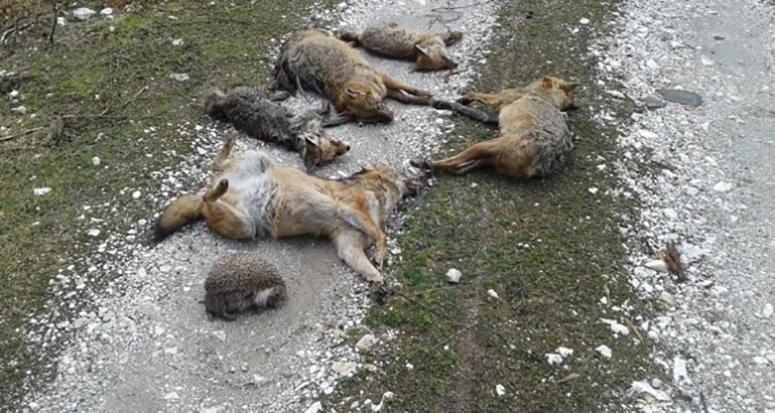 İnegöl'de hayvan katliamı!