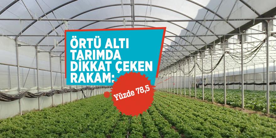 Örtü altı tarımda dikkat çeken rakam: Yüzde 78,5
