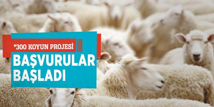 """""""300 koyun projesi"""" Başvurular başladı"""