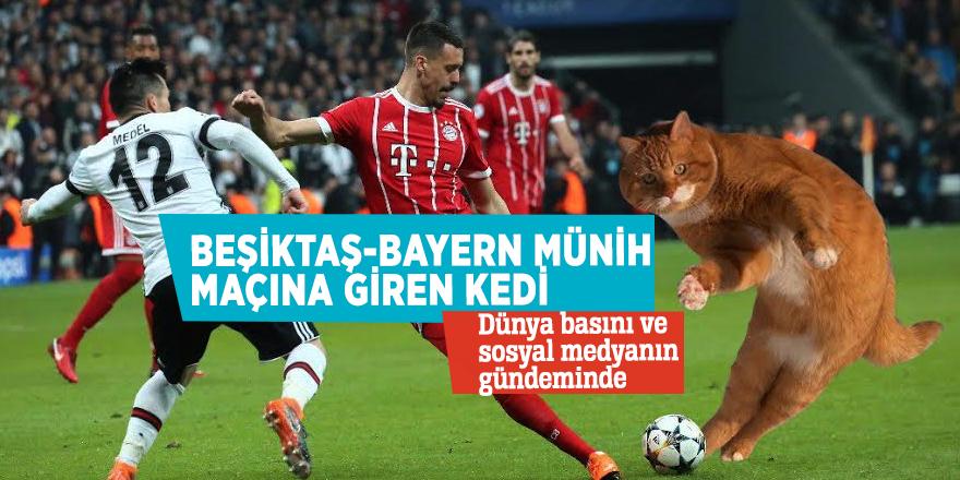 Beşiktaş-Bayern Münih maçına giren kedi Dünya basını ve sosyal medyanın gündeminde