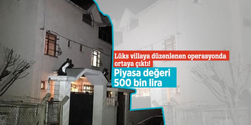 Lüks villaya düzenlenen operasyonda ortaya çıktı! Piyasa değeri 500 bin lira...
