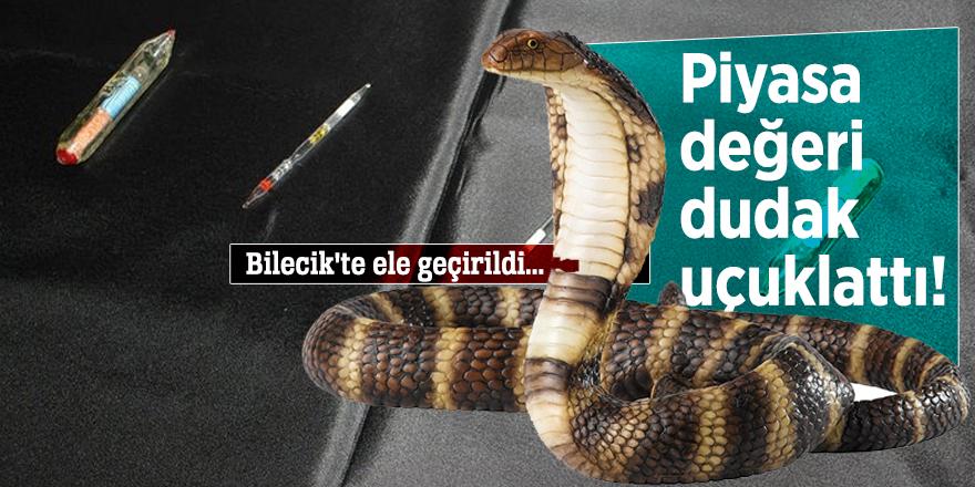 Bilecik'te ele geçirilen kobra zehrinin piyasa değeri dudak uçuklattı