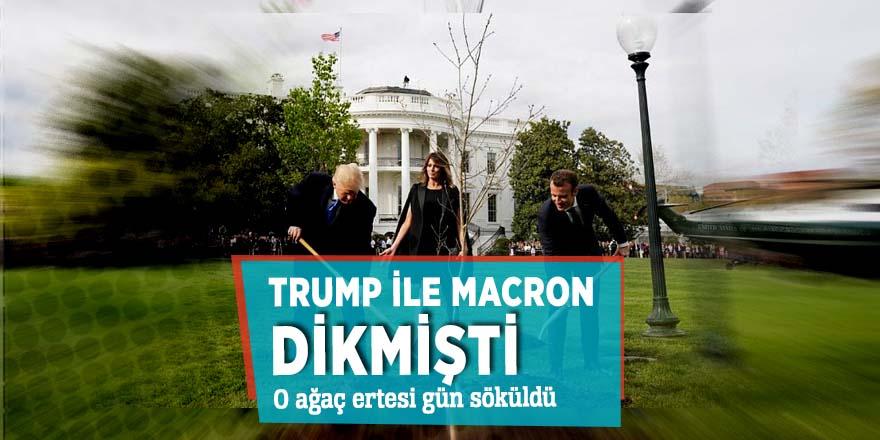 Trump ile Macron dikmişti! O ağaç ertesi gün söküldü