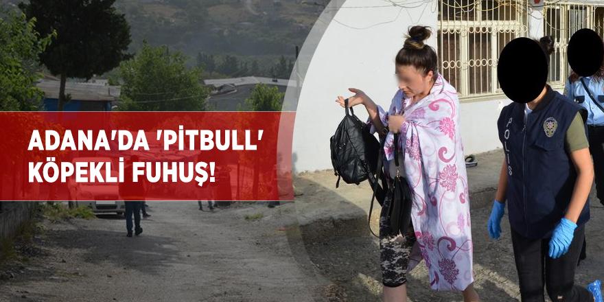 Adana'da 'pitbull' köpekli fuhuş!
