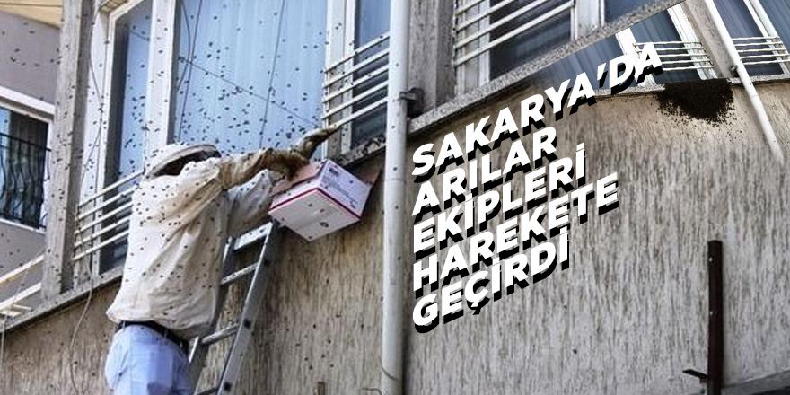Sakarya'da arılar ekipleri harekete geçirdi
