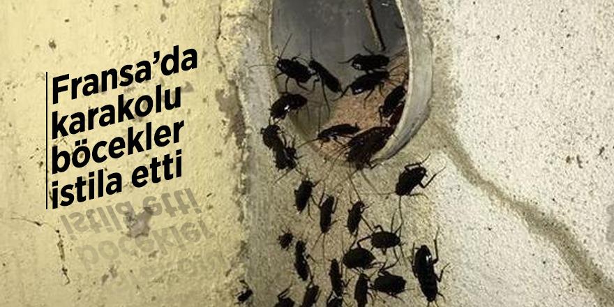 Fransa'da karakolu böcekler istila etti