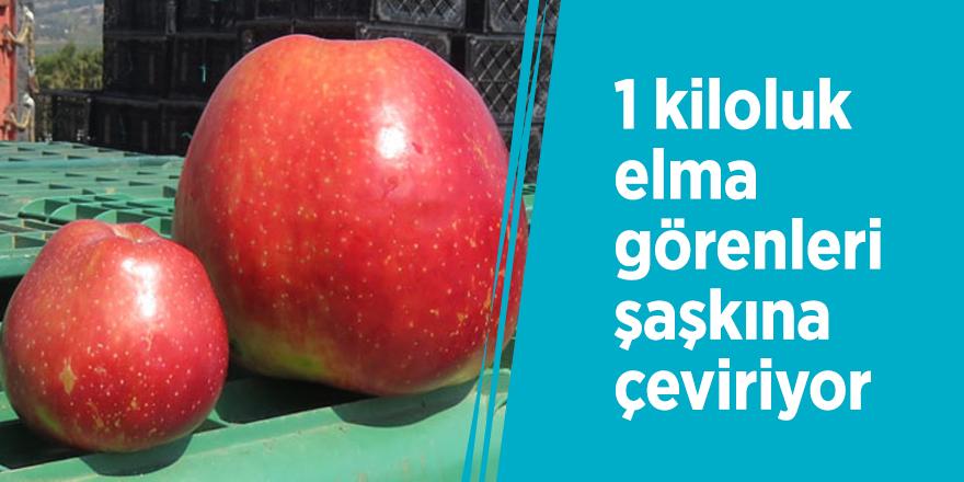 1 kiloluk elma görenleri şaşkına çeviriyor
