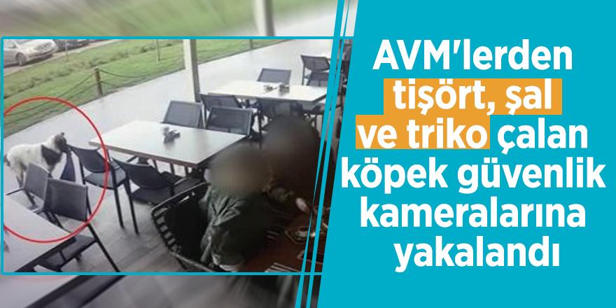 AVM'lerden tişört, şal ve triko çalan köpek güvenlik kameralarına yakalandı