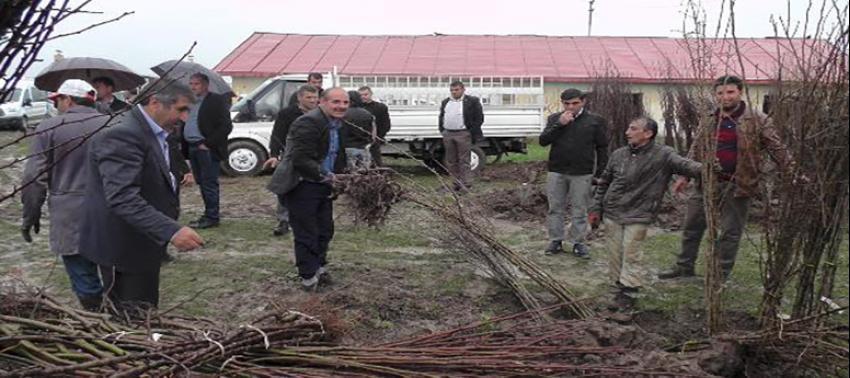 Muş'ta çiftçilere 42 bin meyve fidanı dağıtıldı