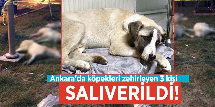 Ankara'da köpekleri zehirleyen 3 kişi salıverildi!
