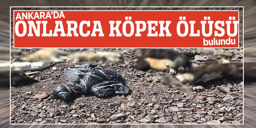 Ankara'da onlarca köpek ölüsü bulundu!