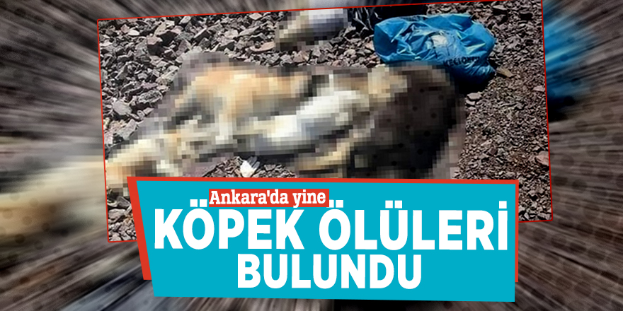 Ankara'da yine köpek ölüleri bulundu