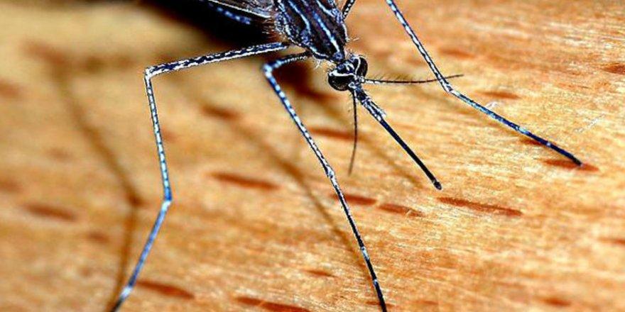 Sıtma alarmı! Milyonlarca kişi tehdit altında